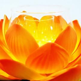 گل نیلوفر مرداب با جاشمعی